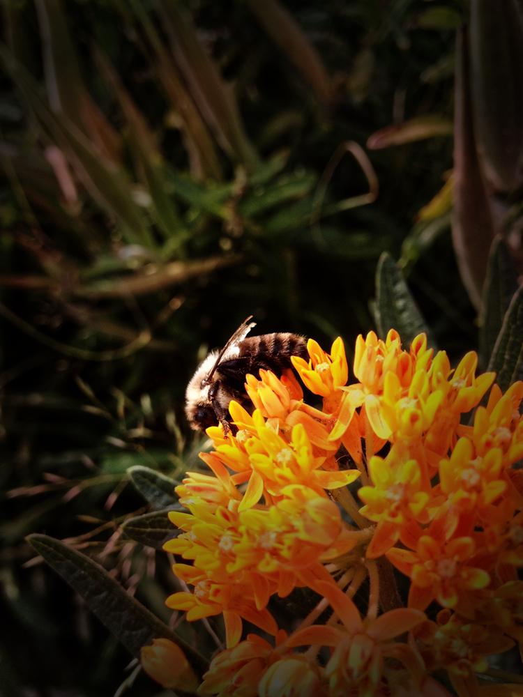 Gertz Bee2