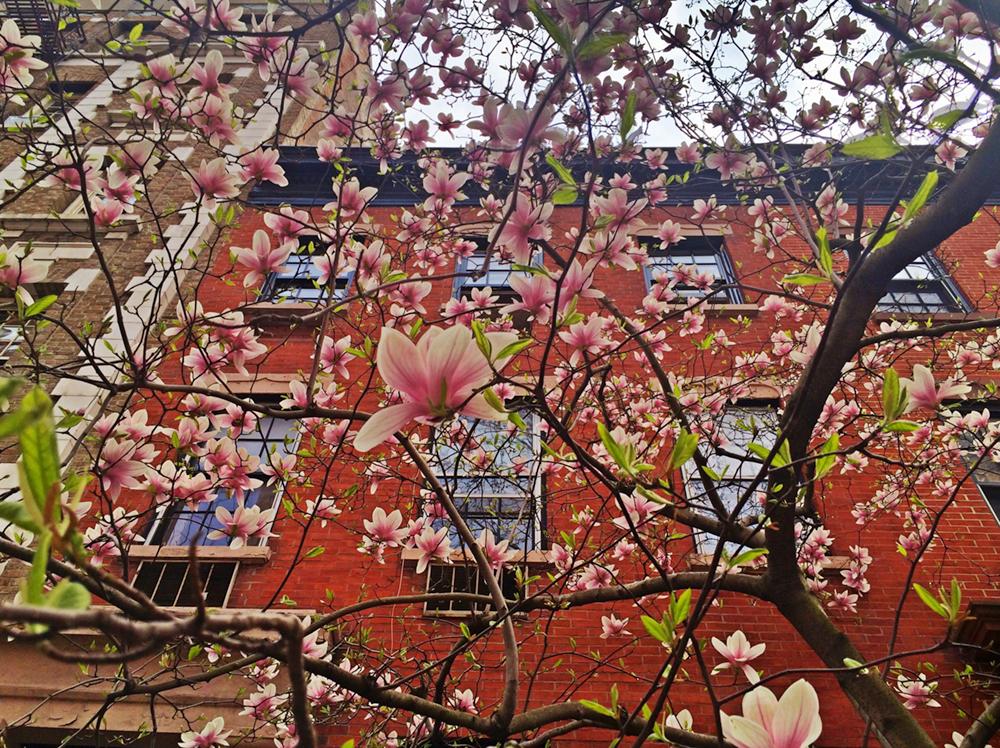 Gertz West Village Bloom